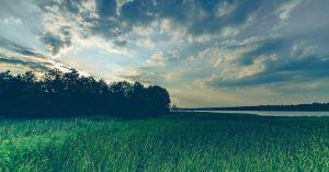 希望の草原